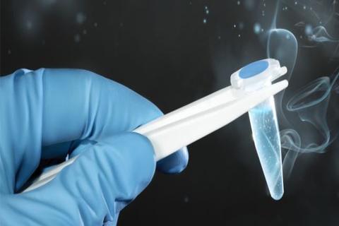 Frozen Embryo Transfer
