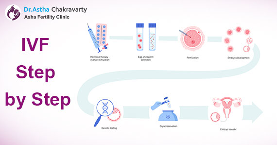 What happens during the IVF process?